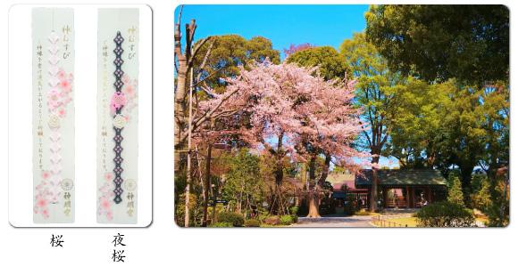 桜の時期限定