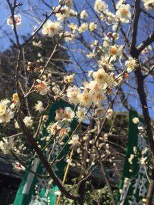 天神さまと梅の花